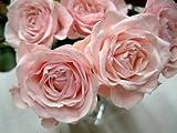 amazon の バラの花束 へ