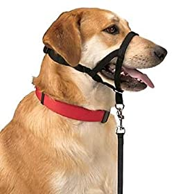 Dog Trainer Leash Reactivity Toronto